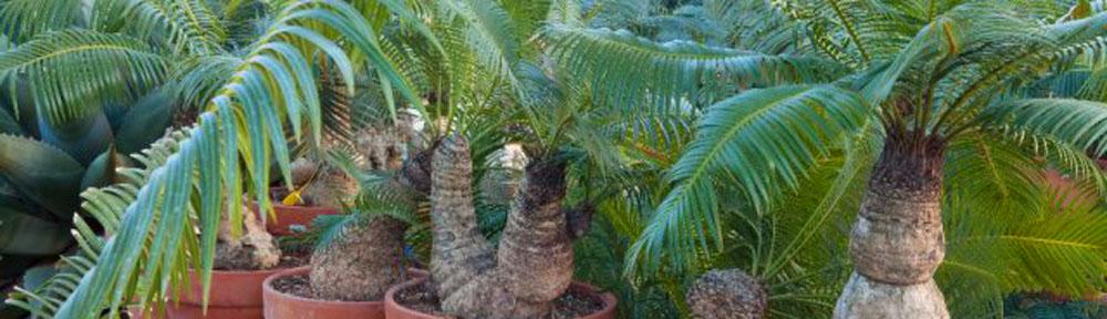 Piante grasse - Giardini con piante grasse ...