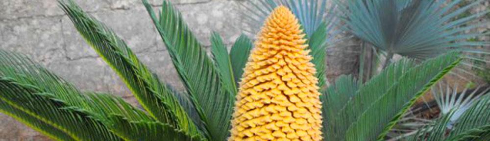 Cactus for Piante grasse succulente