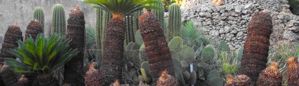 Giardini rocciosi for Tutte le piante grasse