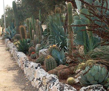 Scarascia cactus cactusfollia for Aiuola piante grasse